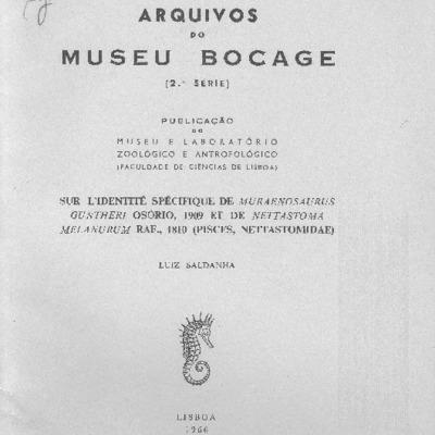 Sur l'identité spécifique de Muraenosaurus guntheri Osório, 1909 et de Nettastoma melanurum Raf., 1810 (Pisces Nettastomidae)